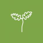 Little Oak Energy logo